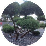 Gartenpflege, Baumschnitt, Baumfällungen, Aslan